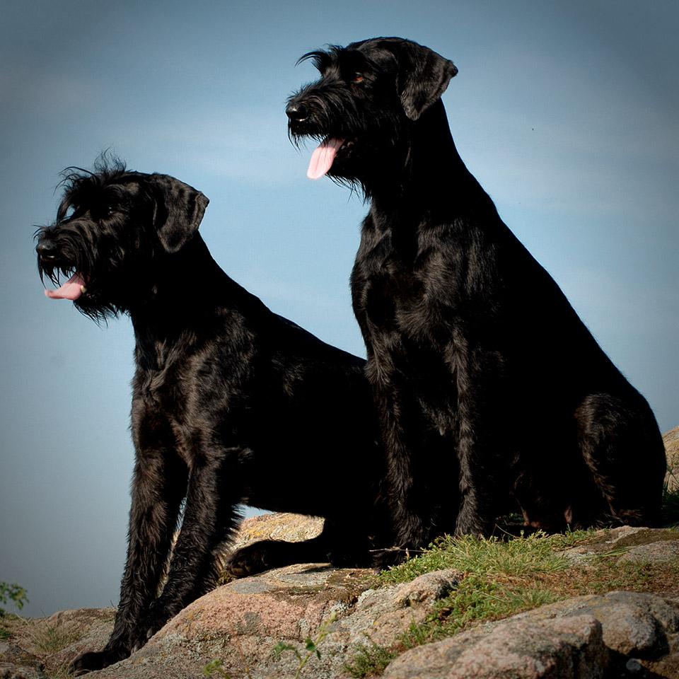 ISPU WM About ISPU - Two Dogs