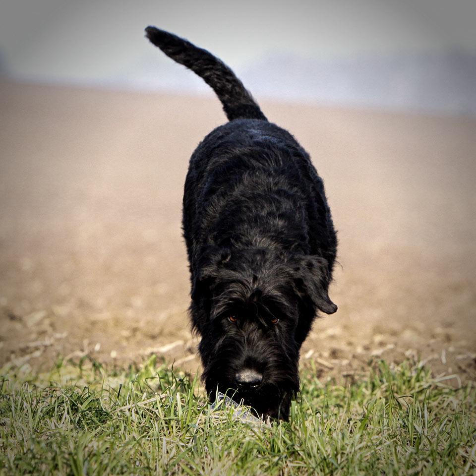 ISPU WM Dog tracking